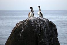 Pelikan stoi nad skałą w oceanu Tropikalnym raju w Los Cabos Meksyk Zdjęcia Royalty Free