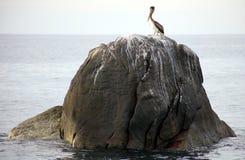 Pelikan stoi nad skałą w oceanu Tropikalnym raju w Los Cabos Meksyk Obraz Royalty Free
