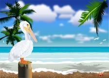 Pelikan-Strand lizenzfreie abbildung