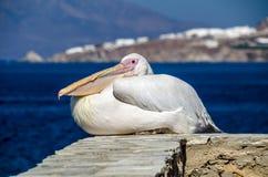 Pelikan tycker om den varma solen på hamnen i Mykonos, Grekland Arkivbilder