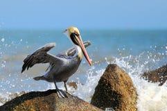 Pelikan und Welle Stockfotos