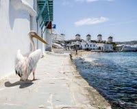 Pelikan und Windmühlen auf Mykonos Stockfotografie