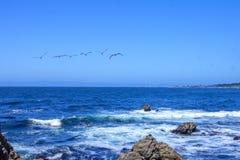Pelikan under flyget, 17 mil drev Fotografering för Bildbyråer