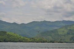 Pelikan von Mexiko Stockbilder