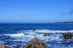 Pelikan während des Fluges, 17 Meilen Antrieb Stockfoto