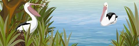Pelikan w gniazdeczku staw z gałęzistym drzewem wysoką trawą i ilustracji