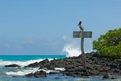 Pelikan w plaży Obrazy Royalty Free