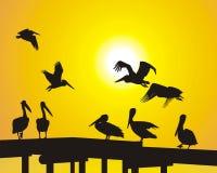 pelikana molo Royalty Ilustracja