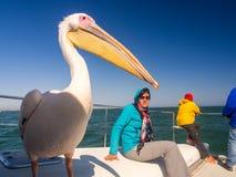 Pelikana obsiadanie na łodzi obok turystów na rejsie w Walvis Zdjęcia Royalty Free