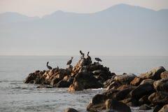Pelikane auf den Felsen mit Bergen im Hintergrund Lizenzfreies Stockbild