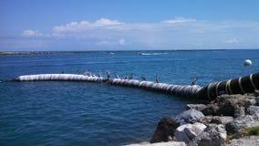 Pelikane auf großem Schlauch Stockfotos