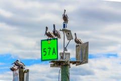 Pelikane auf Ozean-Kanal-Markierung Stockfoto