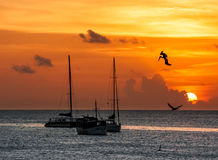 Pelikane auf Sonnenuntergang Stockfotos