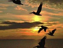 Pelikane bei Sonnenuntergang lizenzfreie stockfotografie