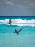 Pelikane in Cancun Lizenzfreie Stockfotografie