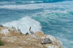 Pelikane, die auf Felsen in La Jolla stillstehen Lizenzfreie Stockbilder