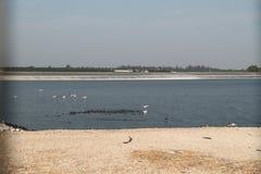 Pelikane in einem See Stockbilder