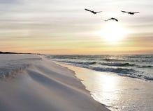 Pelikane fliegen über weißen Sand-Strand bei Sonnenaufgang Stockbilder
