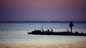 Pelikane gehockt an der Dämmerung an Bucht Anlegestellen-Park-St. Josephs stockbild