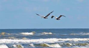 Pelikane im Flug Stockfotos