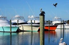 Pelikane im Hafen Lizenzfreie Stockfotos