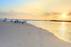 Pelikane passen den Sonnenaufgang auf Stockbild