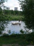 Pelikane und Gebäude Stockfoto