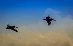 Pelikanen bij zonsondergang Stock Afbeeldingen