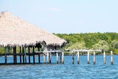 Pelikanen die de zon omhelzen Stock Fotografie