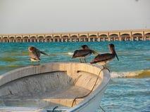 Pelikanen die een rust in een boot nemen bij Progreso-strand, Yucatan, Mexico royalty-vrije stock fotografie