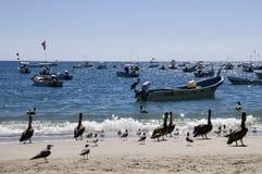 Pelikanen en Boten, Mexico royalty-vrije stock afbeelding