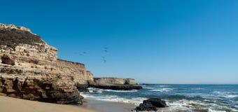 Pelikanen, Santa Cruz Royalty-vrije Stock Foto