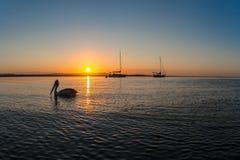 Pelikanfågeln seglar solnedgångreflexioner Royaltyfri Fotografi