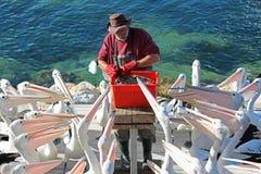 Pelikanfütterung Lizenzfreies Stockfoto
