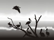 Pelikans on lake shore. Illustration silhouettes pelicans in nature Stock Photos