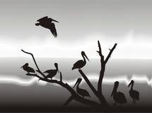 Pelikans sur le rivage de lac Illustration Stock