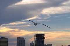 Pelikansolnedgång Royaltyfri Bild