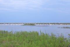 Pelikany w dzikiego Fotografia Royalty Free