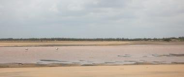 Pelikany w locie nad Sabaki rzeką Kenja obraz royalty free