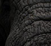 Pellame dell'elefante Immagini Stock