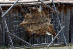 Pellame dell'orso che è allungato Fotografia Stock