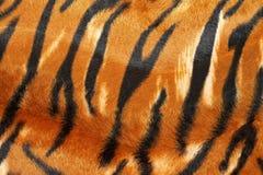 Pellame della tigre Fotografia Stock
