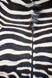 Pellame della zebra che mostra reticolo a strisce astratto Immagini Stock