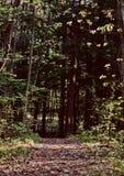 Pellame magico di mistero degli indovini di parapsicologi della foresta soprannaturale Immagine Stock Libera da Diritti