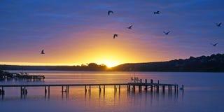Pellaring liso, rio Murray South Australia Imagens de Stock