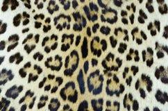 Pelle 3 della tigre Fotografia Stock