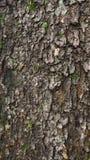 Pelle bagnata dell'albero Struttura di legno astratta immagini stock libere da diritti