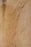 Pelle bovina dal tamburo della Tailandia fotografia stock