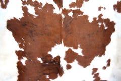Pelle bovina del Brown Immagini Stock Libere da Diritti