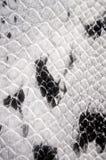 Pelle d'imitazione del pitone di struttura del fondo Fotografia Stock Libera da Diritti